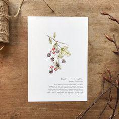 A Natural Year - Bramble - A5 Print — anniebrougham.com English Gifts, Bramble, History Books, Natural History, A5, Fine Art Paper, Digital Prints, Fine Art Prints, Texture