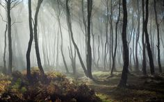 Dreamy Bolehill 3 - Pinned by Mak Khalaf Peak District UK Landscapes autumnbbrackenderbyshireenglandfallfogforestlandscapelightmistpeak districttreesukwoodland by Uk Landscapes, Forest Hill, Peak District, Walk In The Woods, My Tumblr, Cool Lighting, Wonderful Places, Mists, Landscape Photography