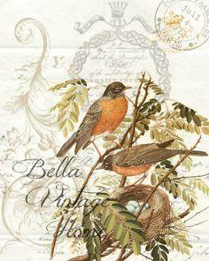 Botanical Double Robin Print