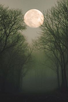 Here are some amazing Full Moon Photography Tips and Ideas that will come handy if you are keen on taking creative moon pictures. Luna Moon, Moon Moon, Moon Art, Sombra Lunar, Shoot The Moon, Moon Shadow, Moon Pictures, Moon Pics, Moon Photography