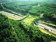 This is a wildlife bridge in the Netherlands. Wildlife bridges are designed to help animals cross busy highways in safety. They don't just protect wildlife from being hit by cars - they also connect fragmented habitats and help populations intermingle and breed. The Netherlands is leading the way in designing these bridges. The country is home to more than 600 similar crossings.  So fucking dope  i ...