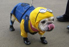 Despicable Me: Minions inspired pet costume - squee!