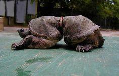 UMA LINDA CIGANA DO ORIENTE: OS IMPACTOS DA POLUIÇÃO NA VIDA HUMANA E ANIMAL