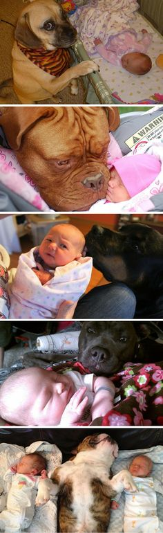 WARNING: May break the internet with cuteness. Dogs meeting babies for the first time could overload the adorablometer.