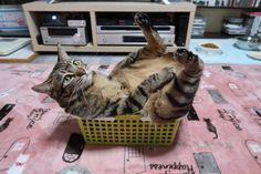 くつろいでいる…?猫さんは液体になれないこともあるようです。