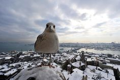 A seagull stands on Galata Tower in Istanbul on January 9, 2013.