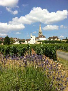 France Burgundy city of Mersault
