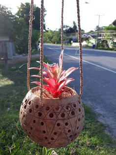 Small Size Handicrafts Coconut Shell Hanging Planter Pot for flower Orchid Natural Color by Handmadebyyucrack on Etsy