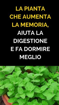 #rimedinaturali #menta #piante Edible Wild Plants, Calendula, Calories, Kraut, Spiritual Quotes, Natural Health, Natural Remedies, Detox, The Cure