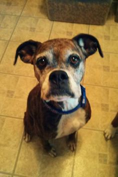 Safe!! MONTANA Hi everyone, my name is Lucy and I have quite the interesting story to tell. I'm eight years young and I was found in a busy intersection by animal control with my Labrador brother. Once he was adopted and I was stuck at the shelter, I star ted...