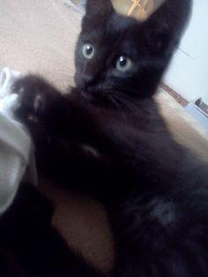 los inicios de mi gato