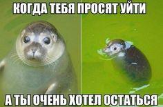 Милаш!)))