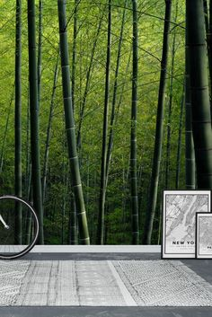 Bamboo Wall Mural - Wallpaper