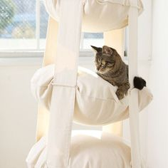 The Cat's Trapeze 3 Level looks pretty easy to make. some old throw pillows and fabric/rope and hang it all up. only thing is my daughter will probably also want to climb it. Crazy Cat Lady, Crazy Cats, Pet Furniture, Pretty Cats, Pretty Kitty, Cat Crafts, Cool Pets, Catio, Cat Life