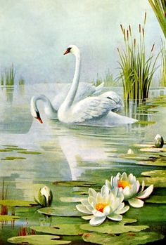 Pretty swan pair drawing from a vintage 1899 magazine. Two beautiful white birds glide majestically among white, yellow and orange water lilies. Landscape Art, Landscape Paintings, Swan Painting, Lotus Painting, Art Vintage, Vintage Birds, Bird Drawings, Water Lilies, Bird Art