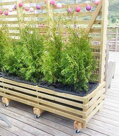 Kvardagsgleder: Levegg på hjul Privacy Planter, Backyard Privacy, Backyard Landscaping, Outdoor Living, Outdoor Decor, Lush Green, Planter Boxes, Outdoor Projects, Gardens