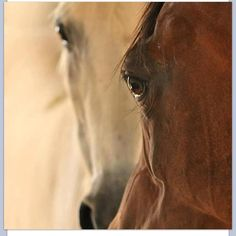 Eyes - this picture reminds me of Lady and her son Star - horses I know on our Ranch in Idaho... beautiful.