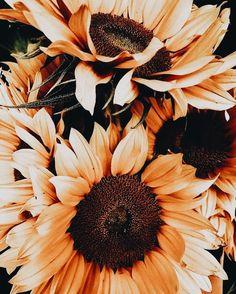 no rain no flowers My Flower, Wild Flowers, Beautiful Flowers, Flowers Nature, Plants Are Friends, No Rain, Mother Nature, Planting Flowers, Flowers Garden