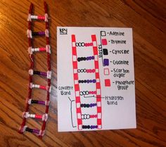 how to make a 3d dna model with pipe cleaners