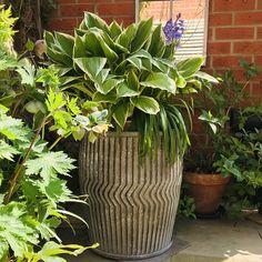 Cat Plant Pot Planter Stone Effect Garden Flower Holder Sculpture Ornament Gift
