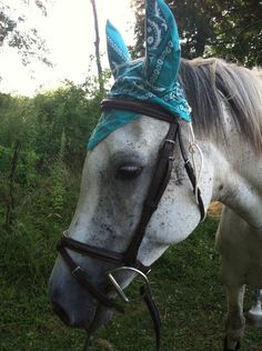 Image detail for -... any) crochet fly bonnet? at the Tack & Equipment forum - Horse Forums
