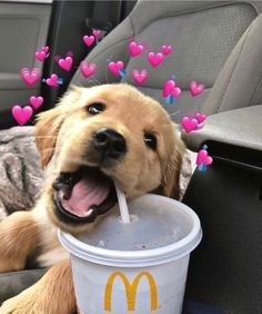 Super Cute Puppies, Cute Baby Dogs, Cute Little Puppies, Cute Dogs And Puppies, Cute Little Animals, Cute Funny Animals, Doggies, Lab Puppies, Pet Dogs