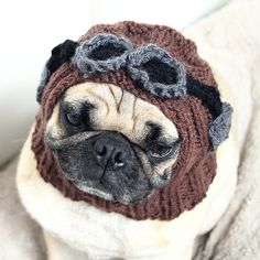 Aviator Hat with Goggles on Pug!