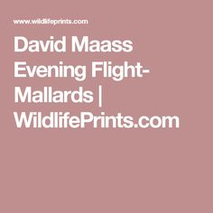 David Maass Evening Flight- Mallards                           | WildlifePrints.com