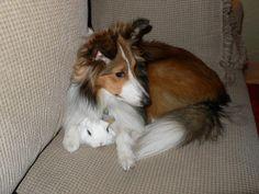 Willow & Akasha (dwarf hotot rabbit)