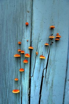 Beautiful Fungi http://media-cache7.pinterest.com/upload/33495590948598538_sBqbuuUF_f.jpg nootherthanbeth nature