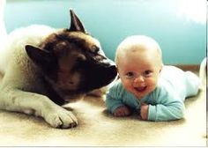 An Akita may be very protective of the children in its family, ...kireisa.com
