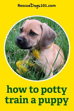 Learn how to potty train any puppy fast with my 4 easy to follow steps. #puppy #puppies #dogs #rescuedogs101 Dog Rescue Shelters, Rescue Puppies, Puppy Potty Training Tips, Dog Training, Animal Rescue Stories, Dogs 101, Dog Pee, New Puppy, Helpful Tips