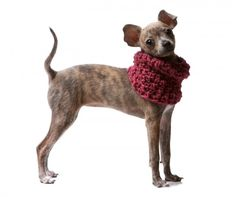 Charlie Hearts Diesel (cowls for dogs)