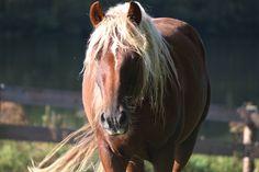 Paard, wild