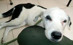 """A dog who was abandoned by her owner at an airport has died of a """"broken heart"""".The dog, called """"Nube Viajera'' or Wandering Cloud by the vets who treated her, spent a month wandering around the terminal at Palonegro airport near Bucaramanga, Colombia hoping to be reunited with her owner.According to"""