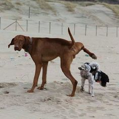 'You Pee on me, I'll Pee on you Big one!' - Funny Dogs in the Snow