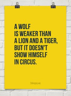 A wolf is weaker than a lion and a tiger, but it doesn't show himself in circus. #72699