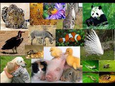 10 animales que estan apunto de extinguirse