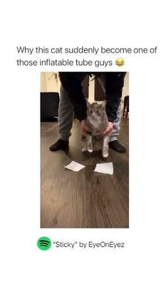 Lol funny cat on pinterest. This is soo cute, please follow us for cute cats/dogs moments. #funnycat #memecat #cat Cat Video, Cute Cats And Dogs, Cute Cat Gif, Cat Memes, Funny Cats, Affirmations, Dog Cat, Cute Animals, Lol
