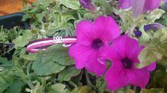 #fiori #loto #lotus http://www.amisjewels.it/shop/lotus   #amis #amisjewels #bracciale #argento #cuoio  http://www.amisjewels.it/