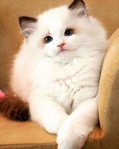 From http://ift.tt/25eF7oO Posted on May 21 2016 at 04:52AM by... Fluffy Cats Cats Kittens LOL Cats Cute Kittens Board