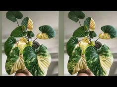 Cómo hacer planta de bolsa de plástico »Wiki Ùtil Ideas de manualidades de flores - YouTube Diy Crafts Hacks, Diy And Crafts, Flower Crafts, Handicraft, Halloween Decorations, Diy Home Decor, Plant Leaves, Recycling, Projects To Try