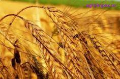 Anunturi agricole gratuite - Anunturi agricole gratuite