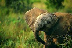 Adorable Elephant.