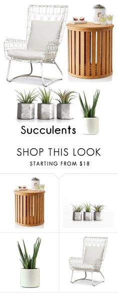 """Succulent"" by lisa-louise-preciado ❤ liked on Polyvore featuring interior, interiors, interior design, home, home decor, interior decorating, Mark & Graham, Palecek, plants and planters"
