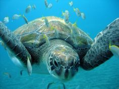 Im Namen der Schildkröte Tortoise, Panzer, Turtles, Animals, Nest, Spain, Pictures, Platypus, Names