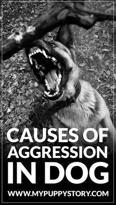 How to stop dog aggression? There could be many causes of aggression in dogs, and one of the reasons is the experience. A dog may be aggressive because it may have a horrible encounter with another dog or it may not have socialized with other dogs when it was young. via @KaufmannsPuppy