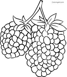 8 free printable Blackberry coloring pages in vector format, easy to print from any device and automatically fit any paper size. Bible Activities For Kids, Bible For Kids, Fruit Coloring Pages, Do A Dot, Felt Patterns, Vector Format, Paper Size, Blackberry, Free Printables
