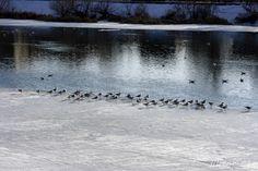 Despre păsări proaste și oameni ipocriți :) Yes Please, I Wish, River, Outdoor, Outdoors, Wish, Rivers, Outdoor Games