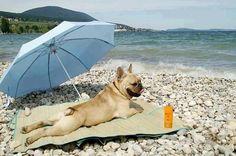 Consejos para pasar un verano tranquilo con nuestros perros